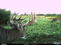 best food plot seed for deer