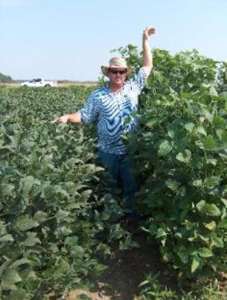 Forage Soybeans - Forage Seed